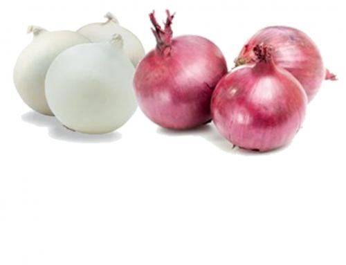 Onions | India