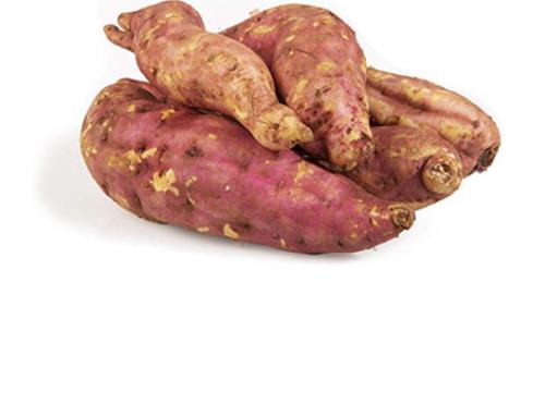 Sweet Potatoes | Bulgaria